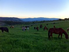 It's a beautiful life at Black Mountain Ranch