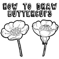 How to Draw Flowers : Drawing Buttercups Step by Step Lesson