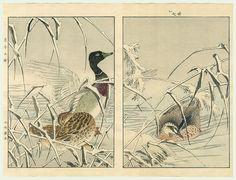 浮世絵 Pinturas del Mundo Flotante: Shosai Ikkei & Imao Keinen