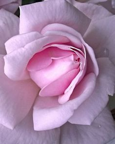 I love pale flowers