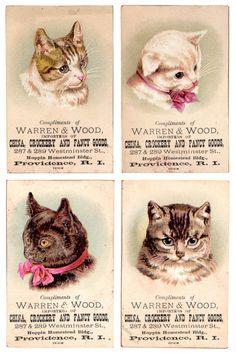 vintage cat advertisement