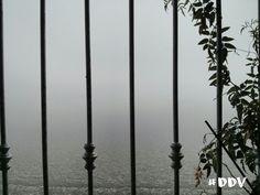 """""""La nebbia arriva su zampine di gatto. S'accuccia e guarda la città e il porto sulle silenziose anche e poi se ne va via."""""""