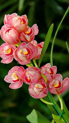 There are so many different types of flowers from around the world. This list offers some țof the most popular that have their own spectacular features.