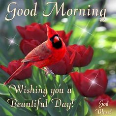 Good Morning, Wishing You A Beautiful Day morning good morning morning quotes good morning quotes good morning greetings Good Morning Wishes Love, Good Morning God Quotes, Morning Greetings Quotes, Good Morning Picture, Good Morning Friends, Good Morning Messages, Good Morning Good Night, Morning Pictures, Good Morning Images
