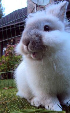 SOooo Cute!!! How could anyone resist that face...no way