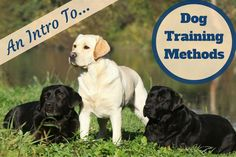 Training your puppy is focused on building your relationship with your dog and setting up boundaries. Be firm but consistent and you'll see incredible results in your dog training work. Dog Training Methods, Basic Dog Training, Dog Training Techniques, Training Your Puppy, Potty Training, Training Classes, Crate Training, Training School, Training Online