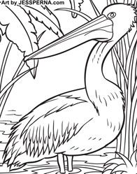 Charmant Pelican Coloring Page Illustrator Hire An Artist