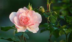 Rose im September - Jahreszeiten - Galerie - Community