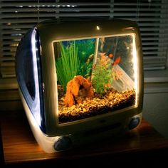 old computer monitors, fish (i am half-japanese, i consider all fish expendable)  = trash; put together = treasure