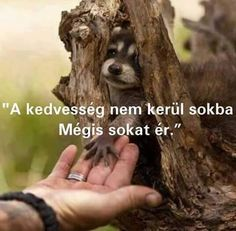 Kedvesség