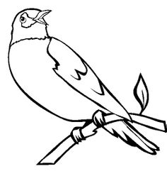 Great Interesting Birds Coloring Pages