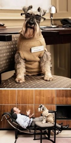 Why I love my schnauzers... :) ...........click here to find out more http://googydog.com