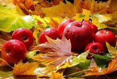 Осень, яблоки