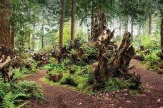 stumpery garden pictures - Bing Images