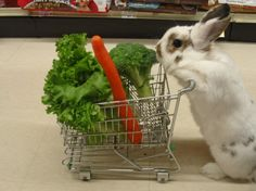 Bunny loads up her shopping cart