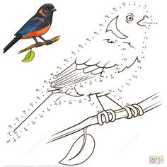 Coloring Books, Coloring Pages, English Teaching Materials, In The Zoo, Montessori Activities, Pencil Drawings, Chibi, Dots, Birds