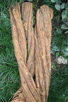 Ayahuasca Root