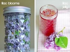 Making jelly out of lilac buds and redbuds in early spring!  SPRING!!!!!!!!!!!!!!!!!!!!!!!!!!!!!