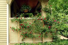 how to make a custom rose trellis