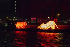 Image result for light festival