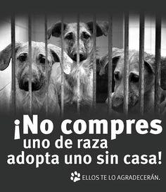 Contra la venta de cachorros de perros bull dog ingles A Coruña