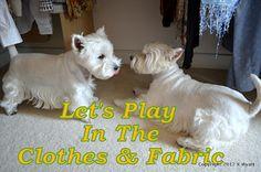 Westie Julep: Westies Playing in my Fabric!