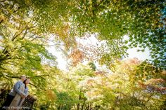 Naturai Deep Vintage pre wedding photography #Kyoto  #engagement #green