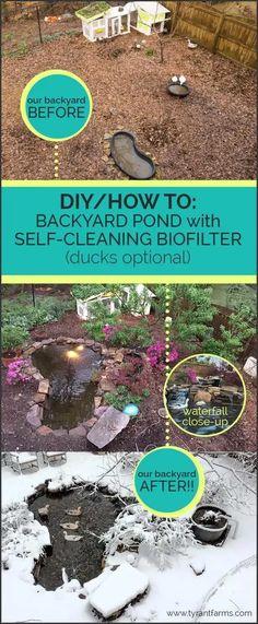 How to build a DIY backyard pond with self-cleaning biofilter Backyard Ducks, Backyard Farming, Ponds Backyard, Backyard Ideas, Backyard Waterfalls, Garden Ponds, Koi Ponds, Pergola Ideas, Herb Garden