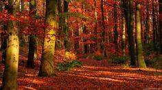 autumn wallpaper 1920x1080 058 Autumn Forest Wallpaper