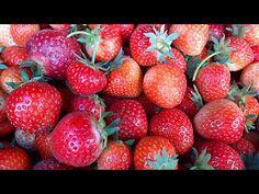 Jahody ve vlastní šťávě zavařené v troubě - samosběr Šakvice 2020 - YouTube Strawberry, Menu, Fruit, Youtube, Food, Menu Board Design, Essen, Strawberry Fruit, Meals