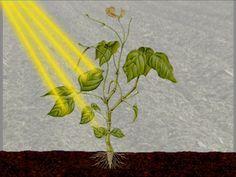 Planten hebben drie dingen nodig om te leven: licht, water en kooldioxide.