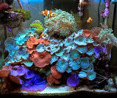Image result for reef tank