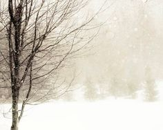 Winter photography neutral white brown snow wall decor by Raceytay, $30.00