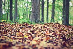Herfst: noten en vruchten verzamelen! | HelloFresh Blog