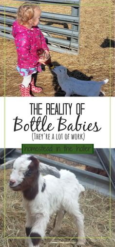 Before you make a spontaneous buy and come home with a 2 day old lamb, there are some realities to having bottle babies that you need to consider. Raising Farm Animals, Raising Goats, Goat Playground, Keeping Goats, Goat Shelter, Goat Care, Boer Goats, Baby Lamb, Small Farm