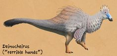 Weird Backs Month #28 – Deinocheirus For almost 50 years Deinocheirus was known only from a pair of huge arms and a few small associated fragments from the Late Cretaceous of Mongolia (~70 mya). At...