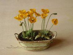 Jicolin.free.fr miniature poppies