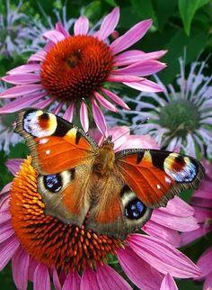 Camaleónica con el medio. #butterflies #mariposas