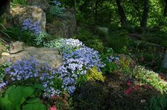 SHADY BOULDER GARDEN  Rock gardens in the shade can harbor wildflowers, hosta and a grand array of tiny ferns and trailing groundcovers. Large boulders create shelter for moisture-loving rarities that create an unusual garden atmosphere.