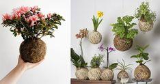 Kokedama é uma forma de plantar onde o vaso é o musgo e a própria terra, que segura as raízes. Como tudo na cultura japonesa, essa é...