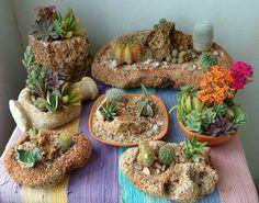 Mini-cacti ~ succulents garden