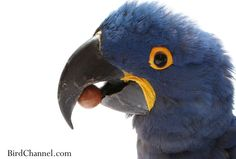 Find out how many nuts to feed your macaw to meet its dietary needs.