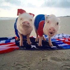 "Pop, you packed the ""pignic"" right?We got up early, so we could be the first ones on the beach! Happy Labor Day everyone! Rest and be thankful!❤️#LaborDay #LaborDayWeekend #PonteVedraInnAndClub #flag #PrissyAndPop"