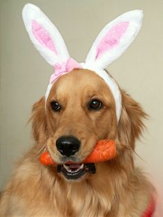 It's the Easter Bunny!