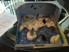 2nd Grade project Arctic Diorama