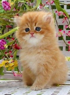 This lovely ginger kitten looks like a cheeky chappie don't you think?