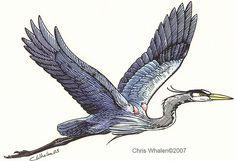 great blue heron tattoo - Google Search
