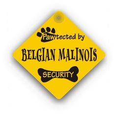 Belgian Malinois Security