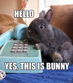 Adorable bunny on the telephone!