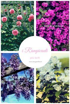 La nostra scelta dei piu belli fiori adatti ai archi e grigliati. Quali sono i vostri rampicanti preferiti?